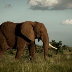 Elephants 02